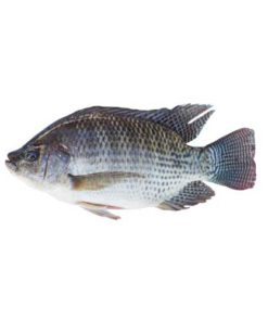 Tilapia Fish 1Kg After Process (Approx 650-700 gms)